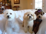 Since there are no grand babies, I have tried to make up the void in my life with my four legged babies.  Here are 3 of